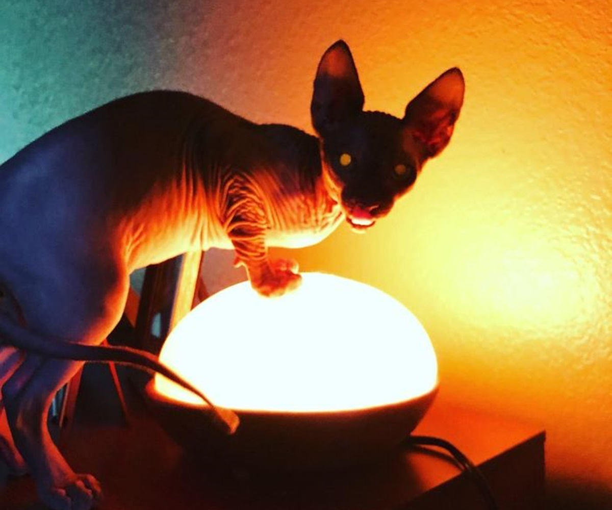 gatto lampada