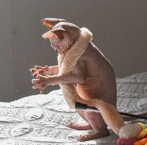 gatto piano