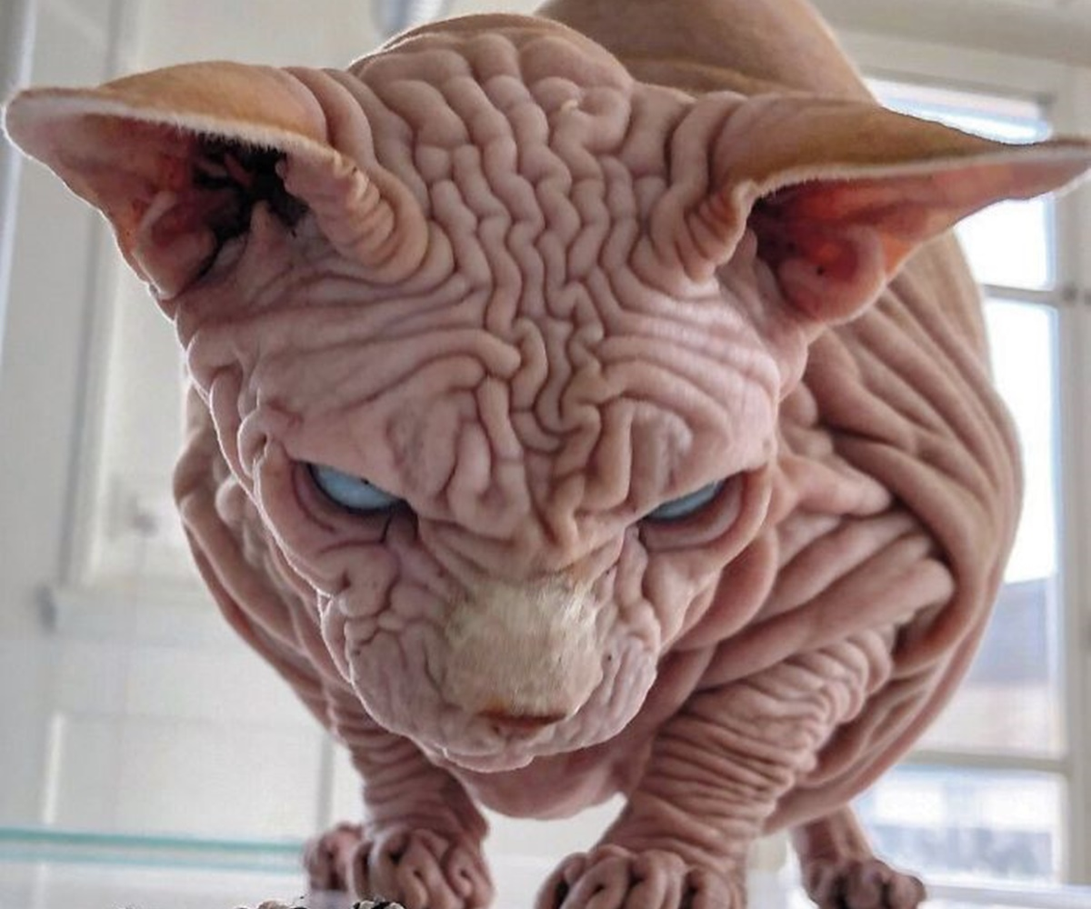 gatto demone