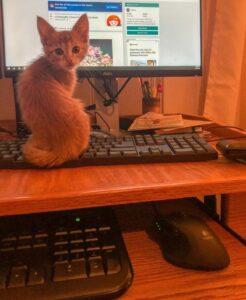 gatto su pc