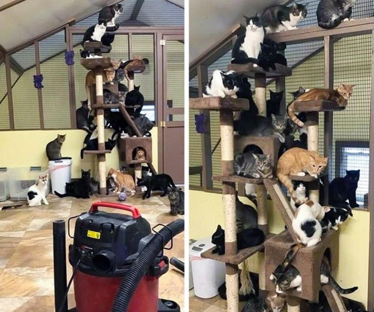 gatti aspirapolvere