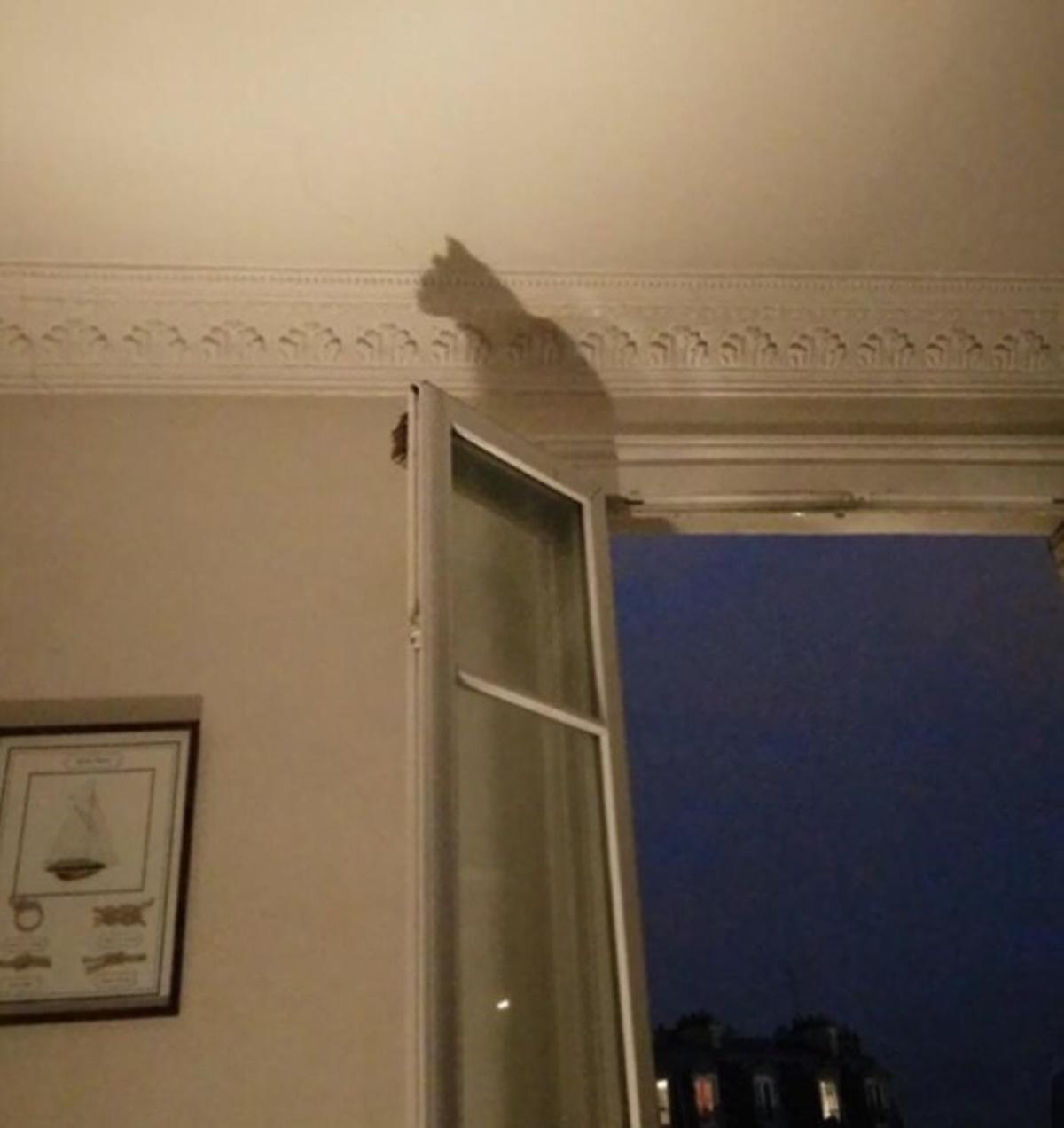 gatto ombra finestra