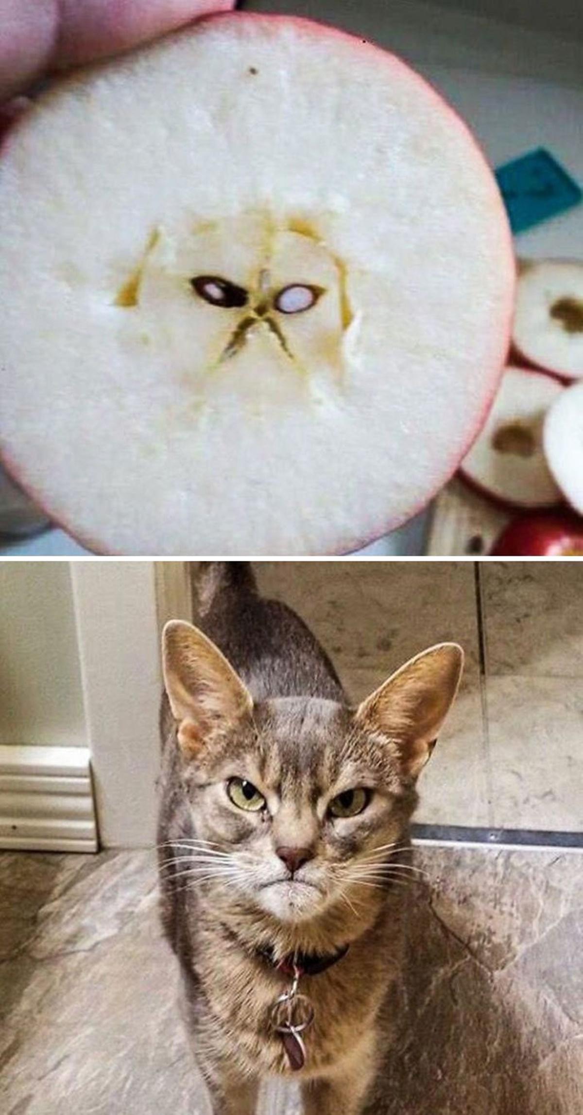 mela gatto
