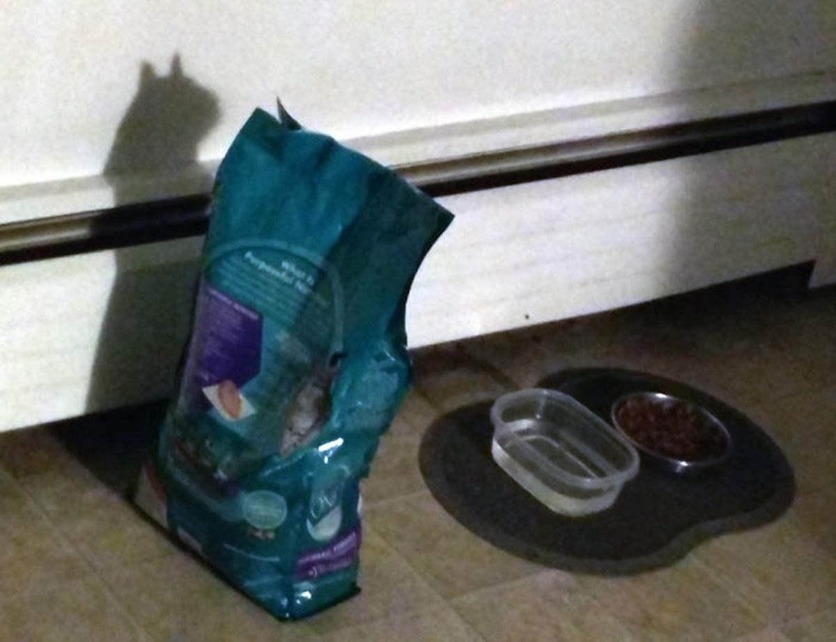 gatto cibo