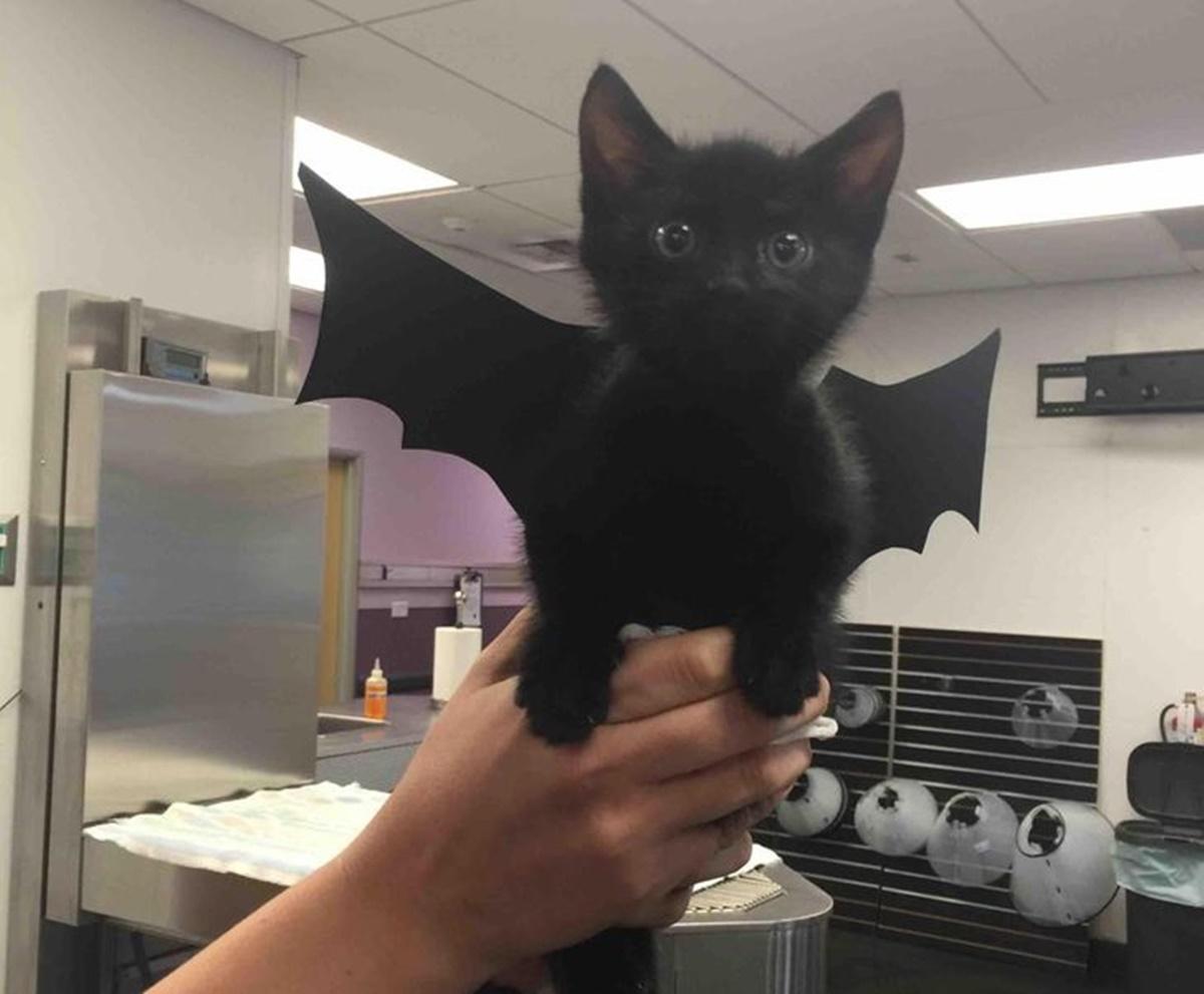 gatto batman