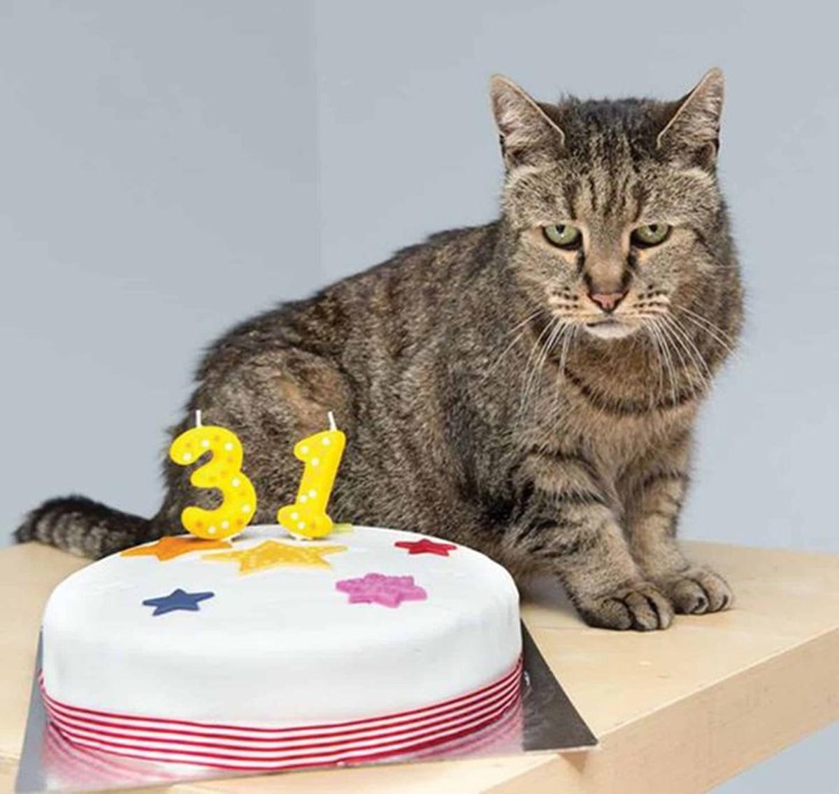 gatto compleanno