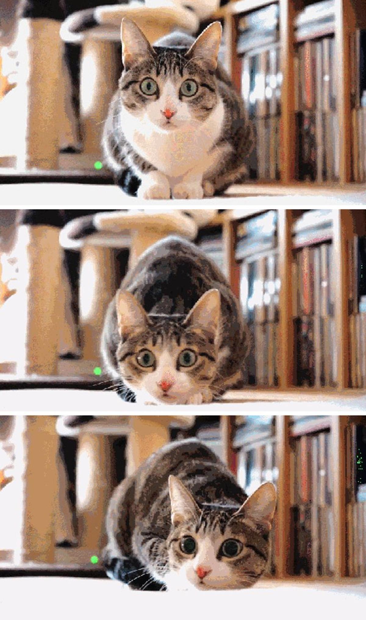 gatto scossa