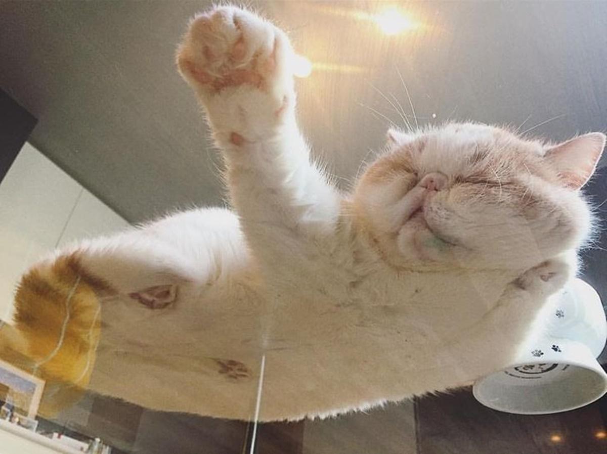 gatto vetro