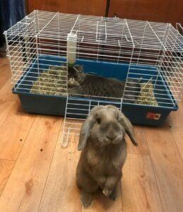gatto nella gabbia