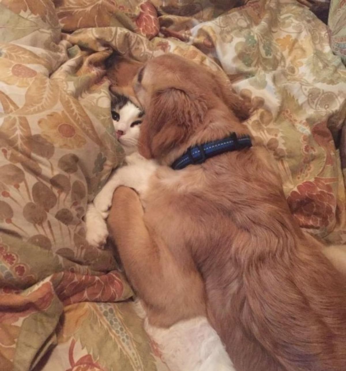 gatto abbraccio cane