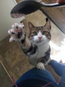 gatto si prende cucchiaino