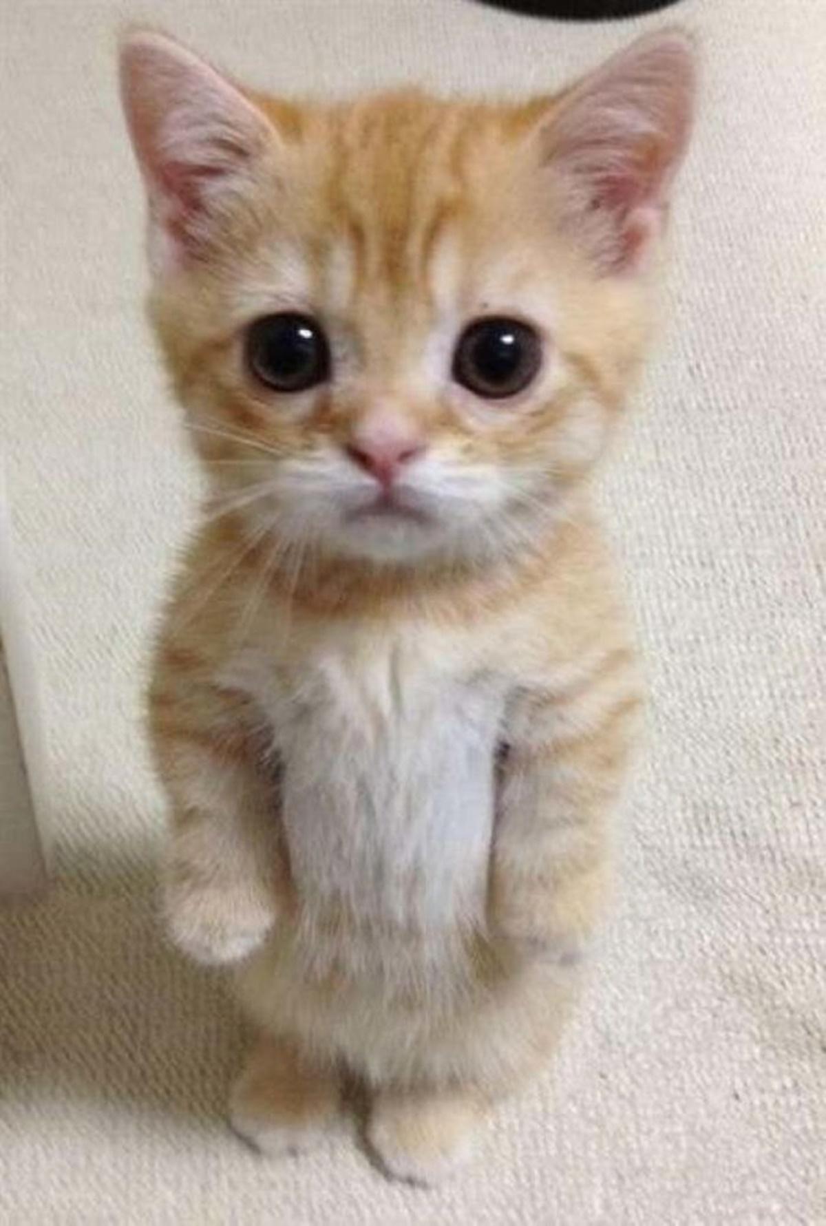 gattino ti guarda
