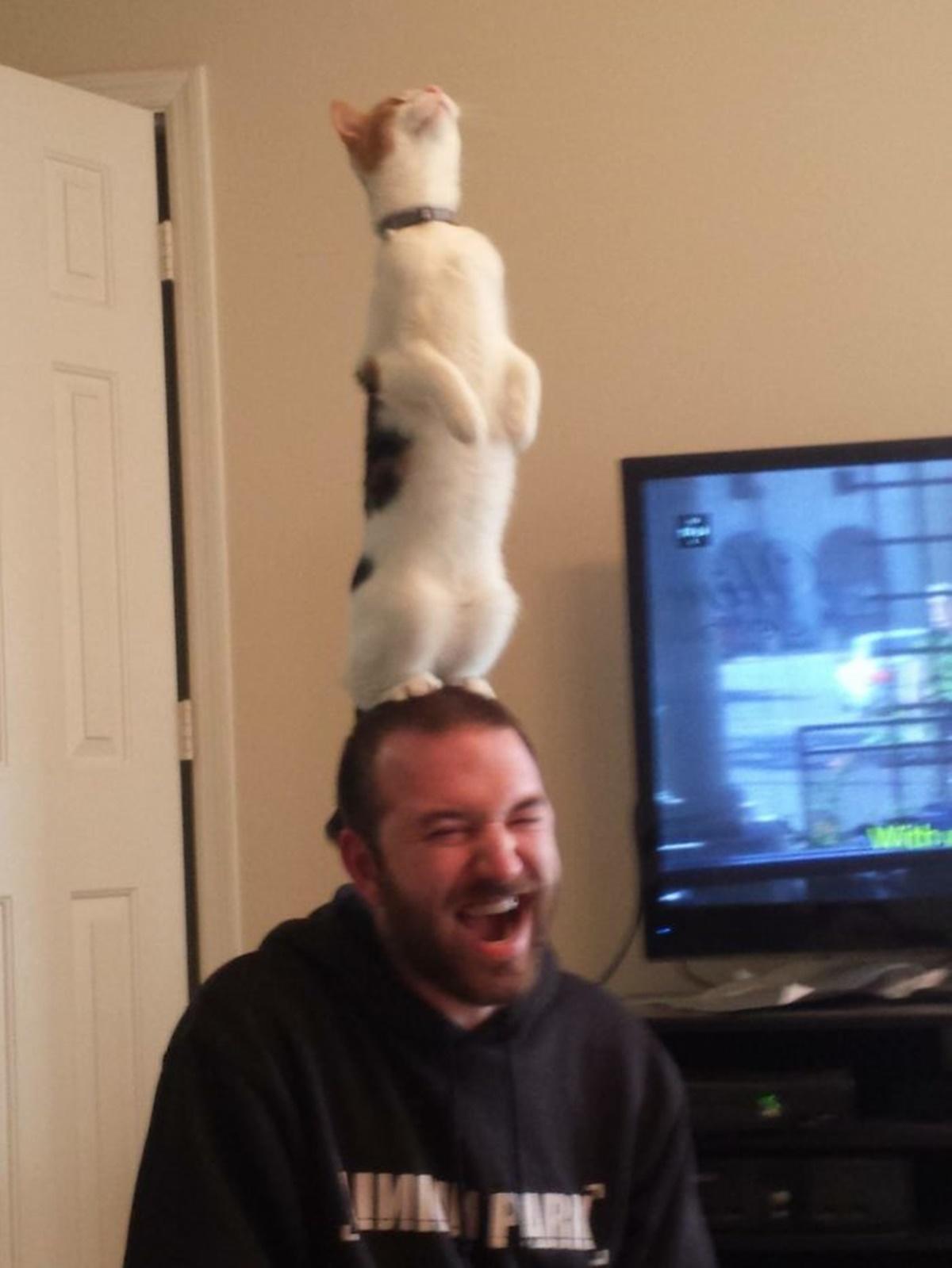 gatto testa