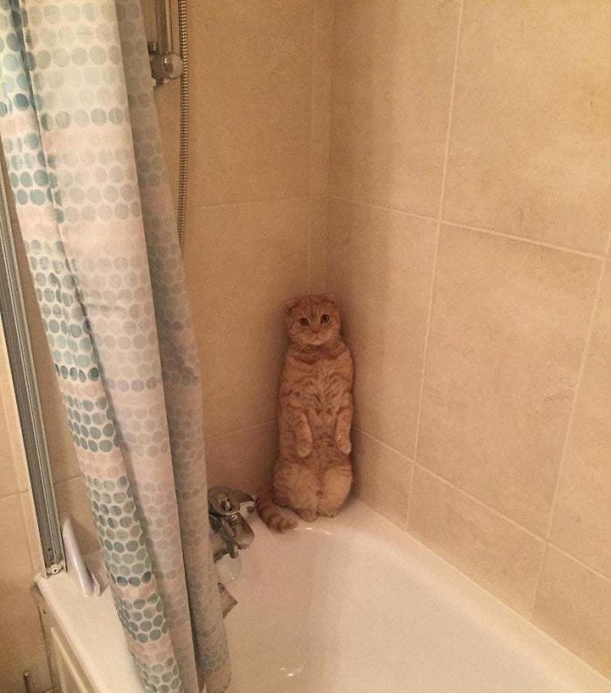 gatto bagno