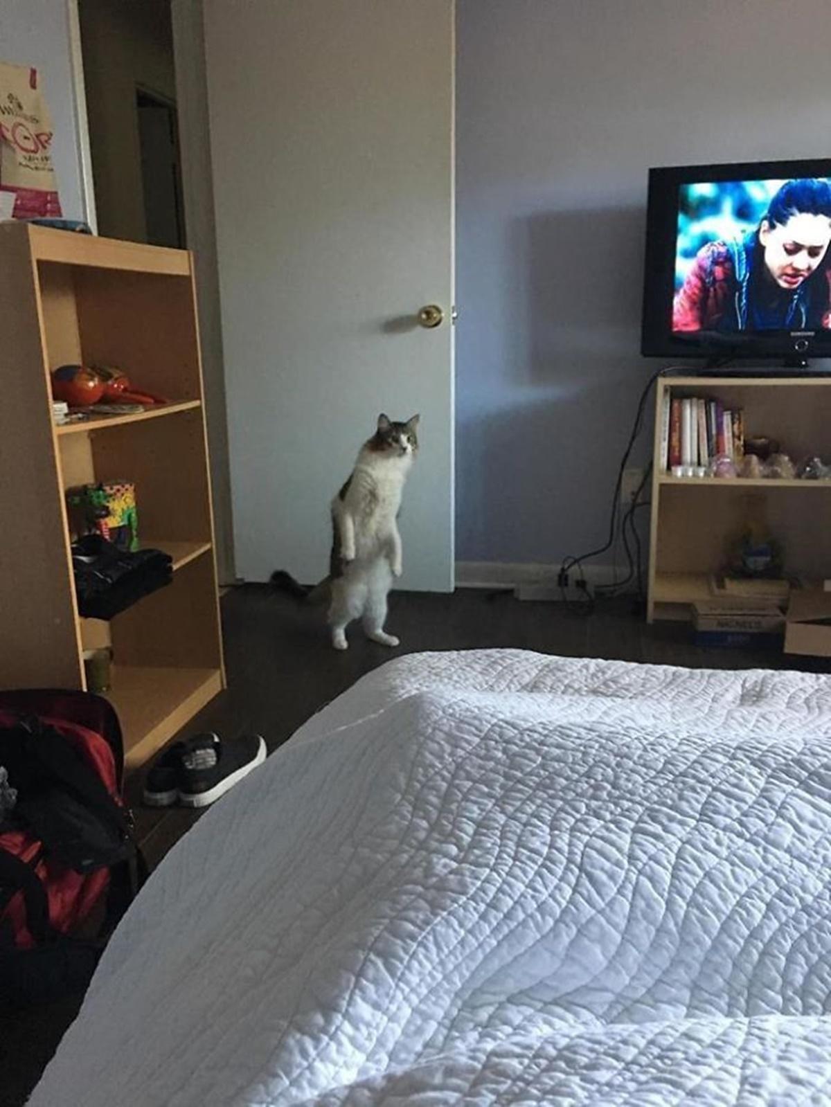 gatto camera