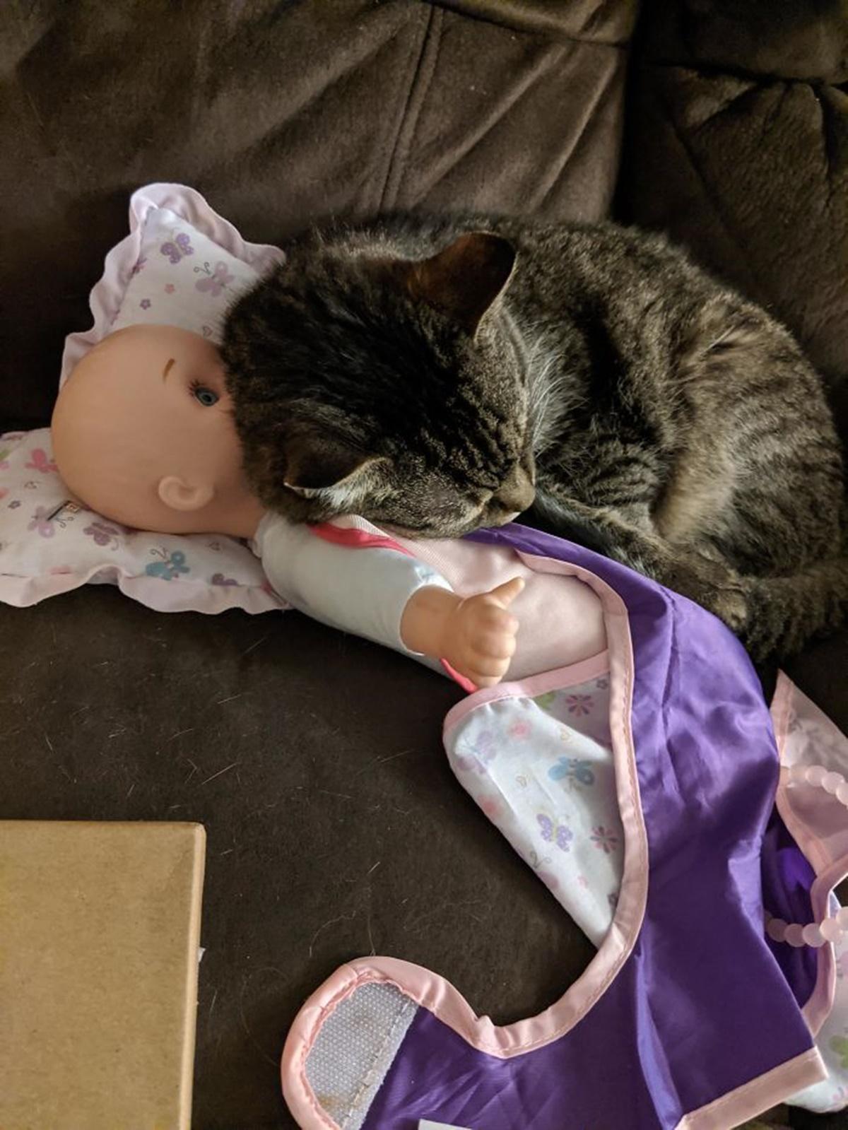 gatto bambola