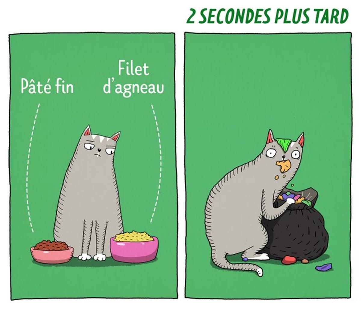 gatto ciotole