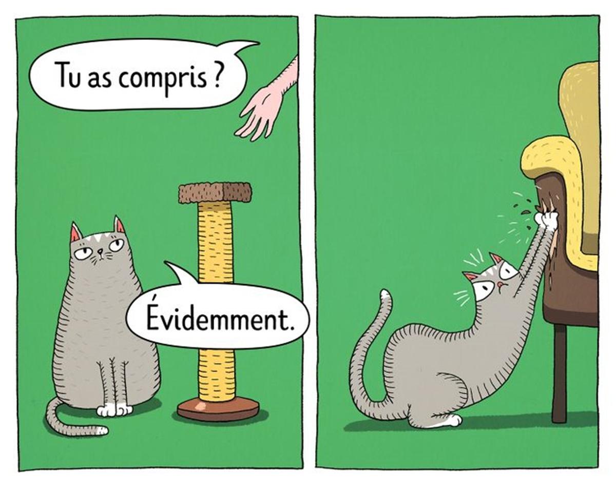 gatto graffi