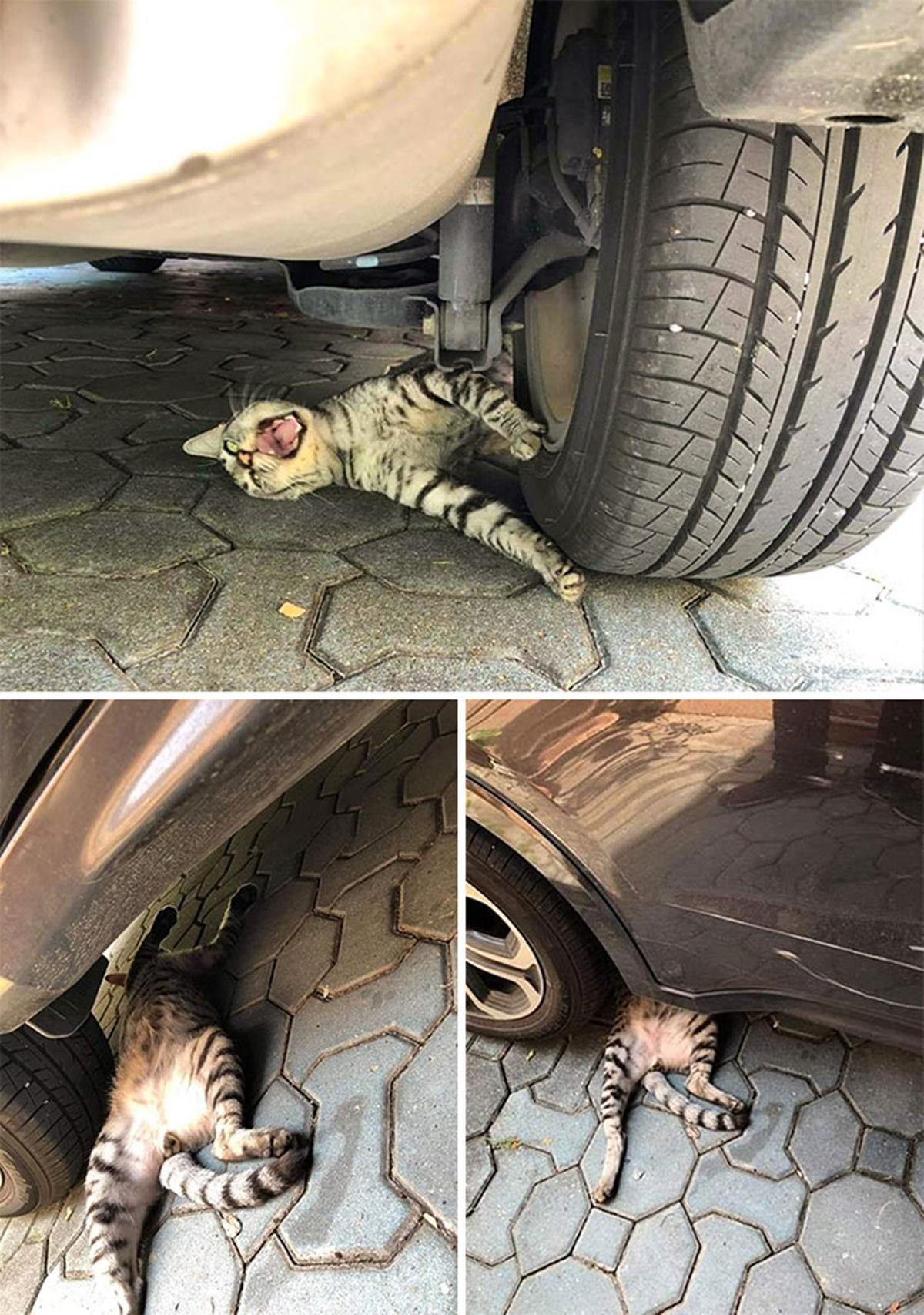 gatto ruota