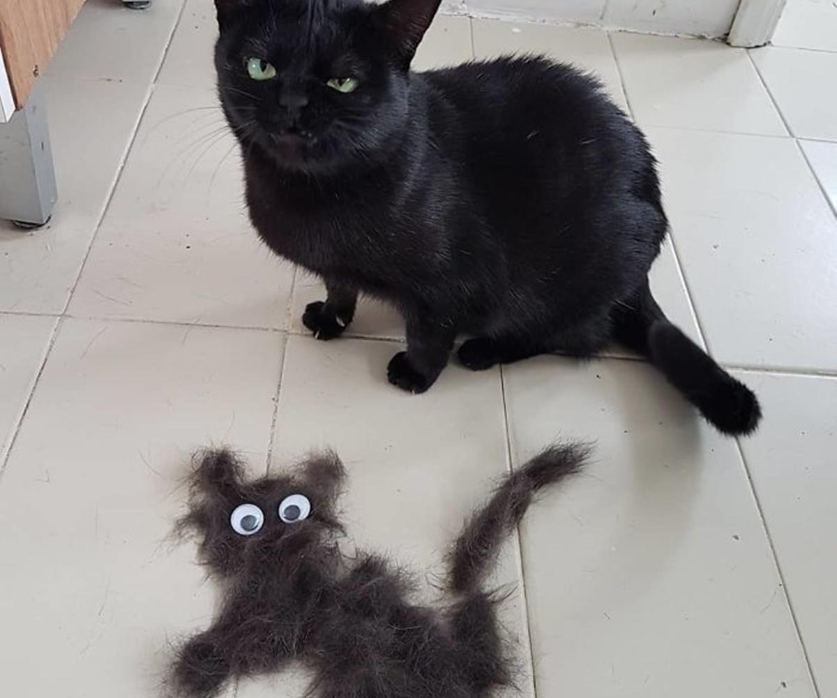 gatto pelo