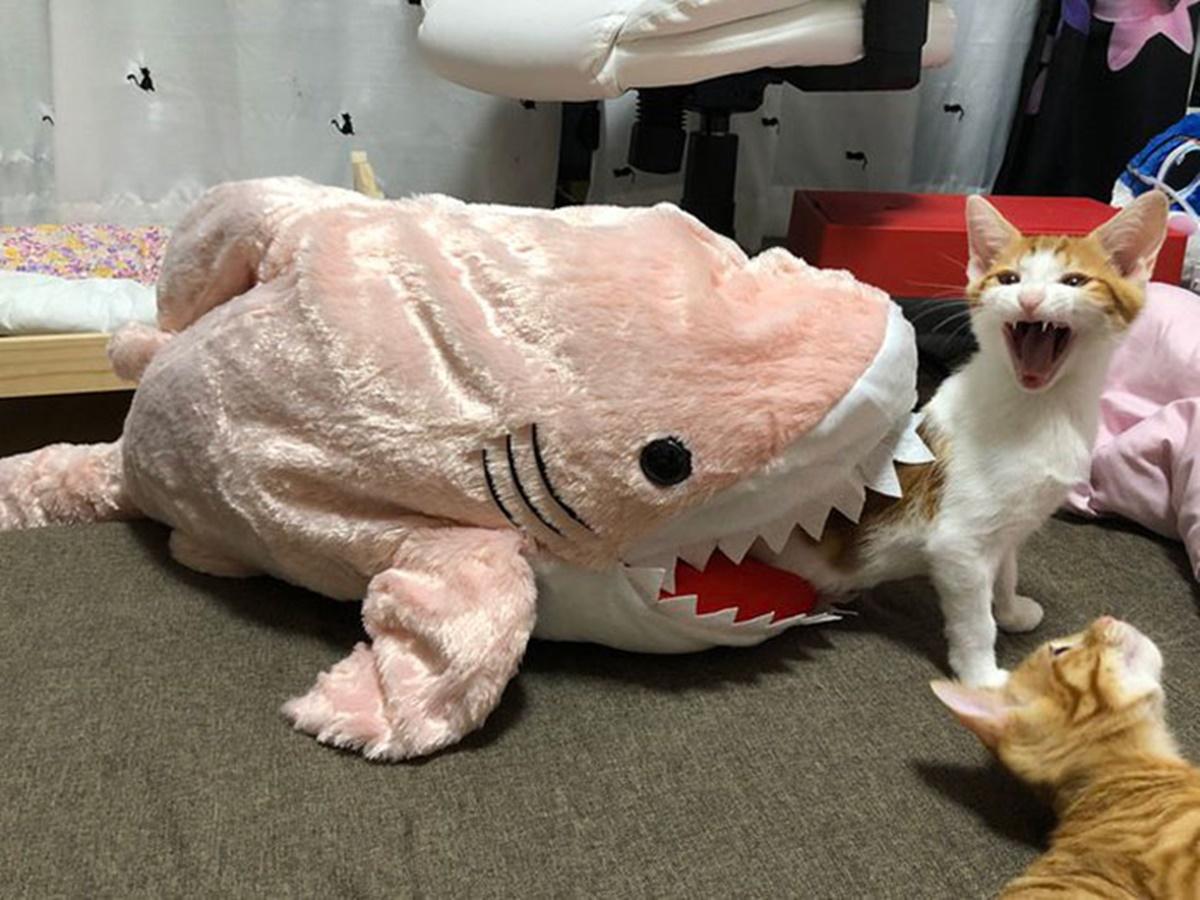 gatto squalo