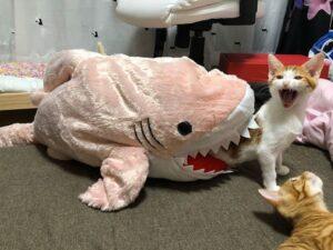 gatto squalo rosa