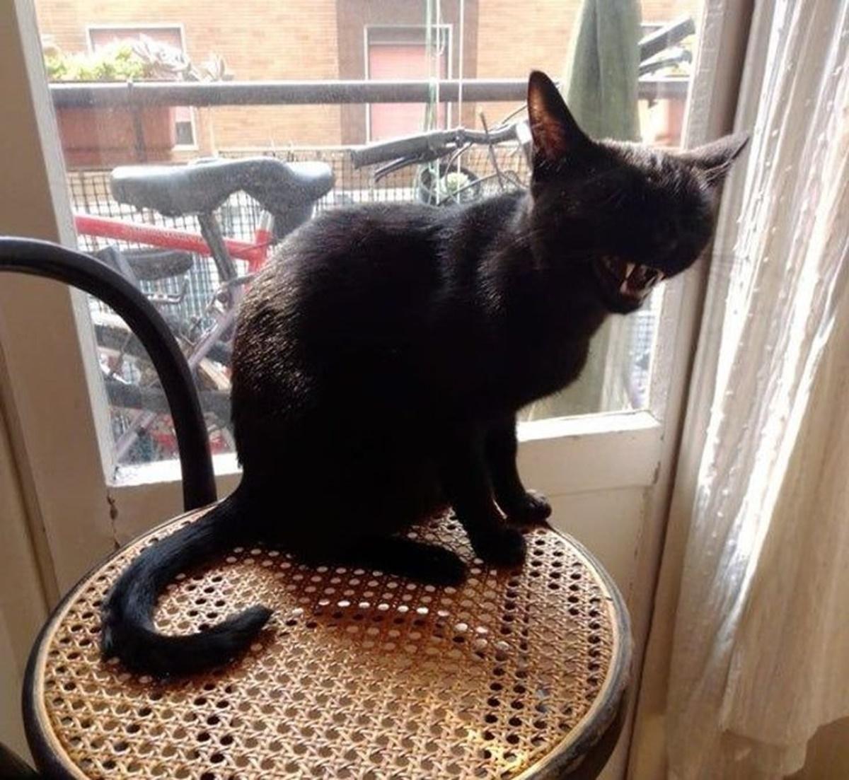 gatto luce