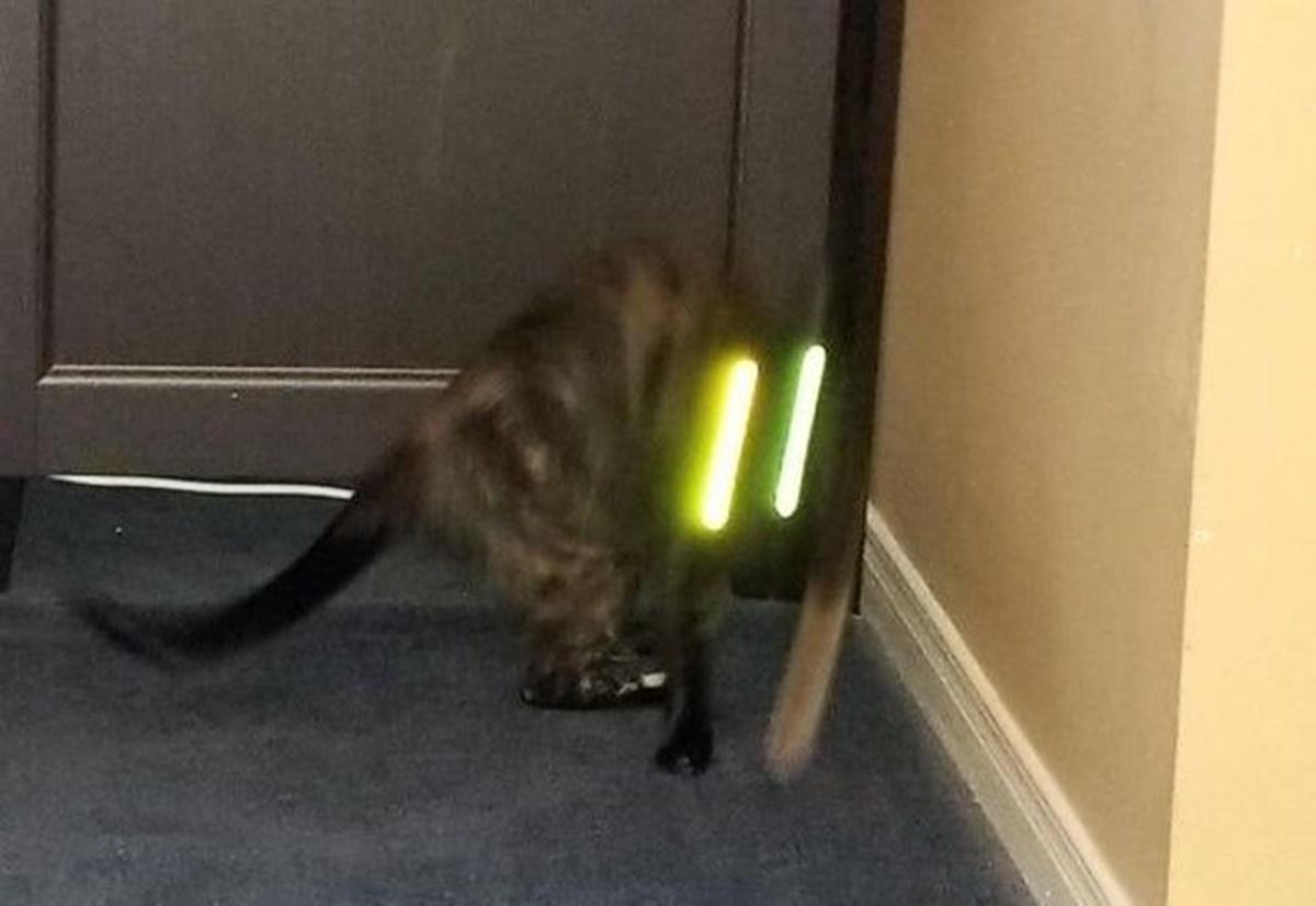 gatto occhi luci