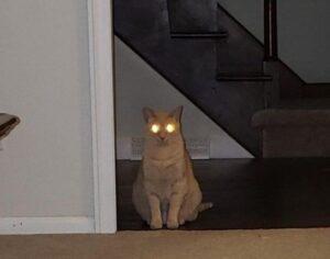 gatto occhi lucidi
