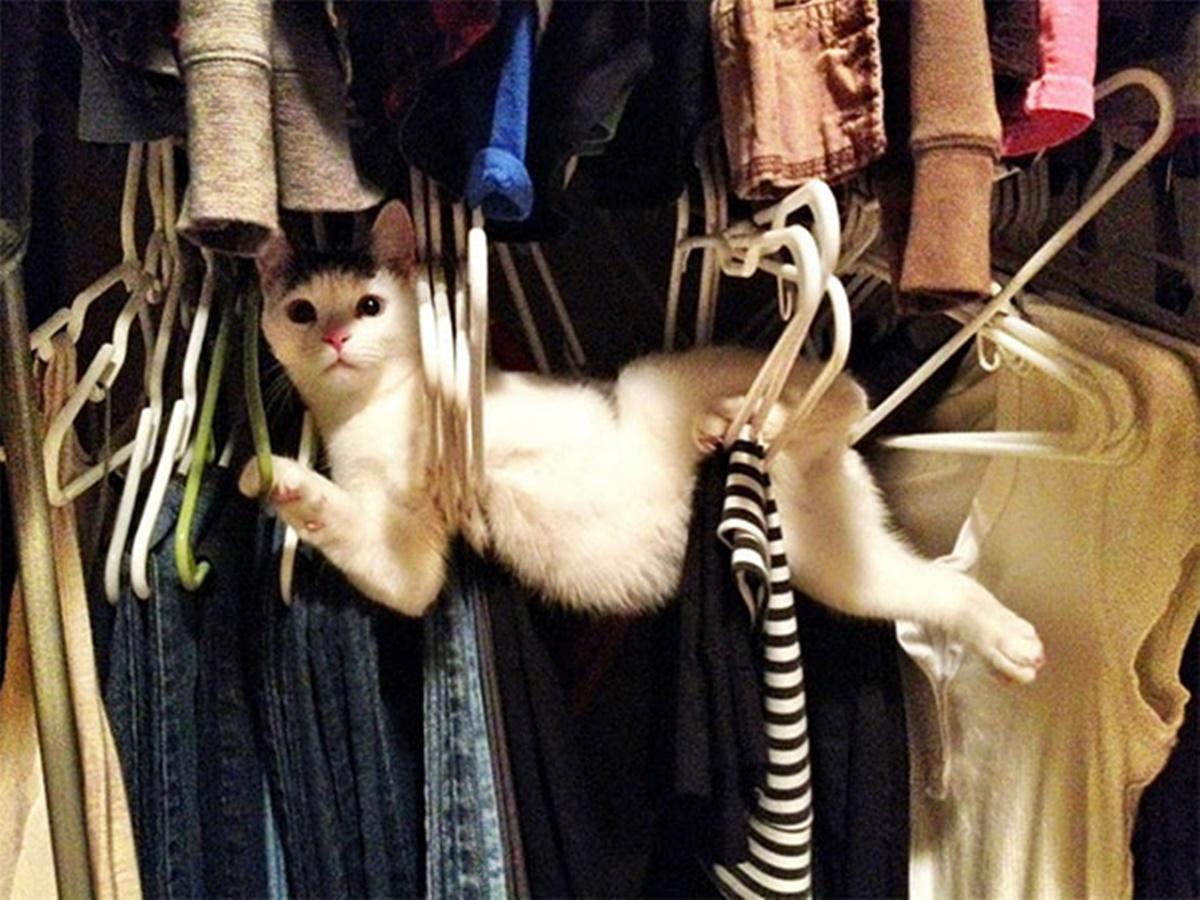 gatto armadio