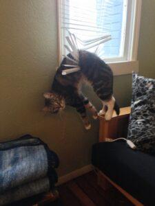 gatto nelle tapparelle