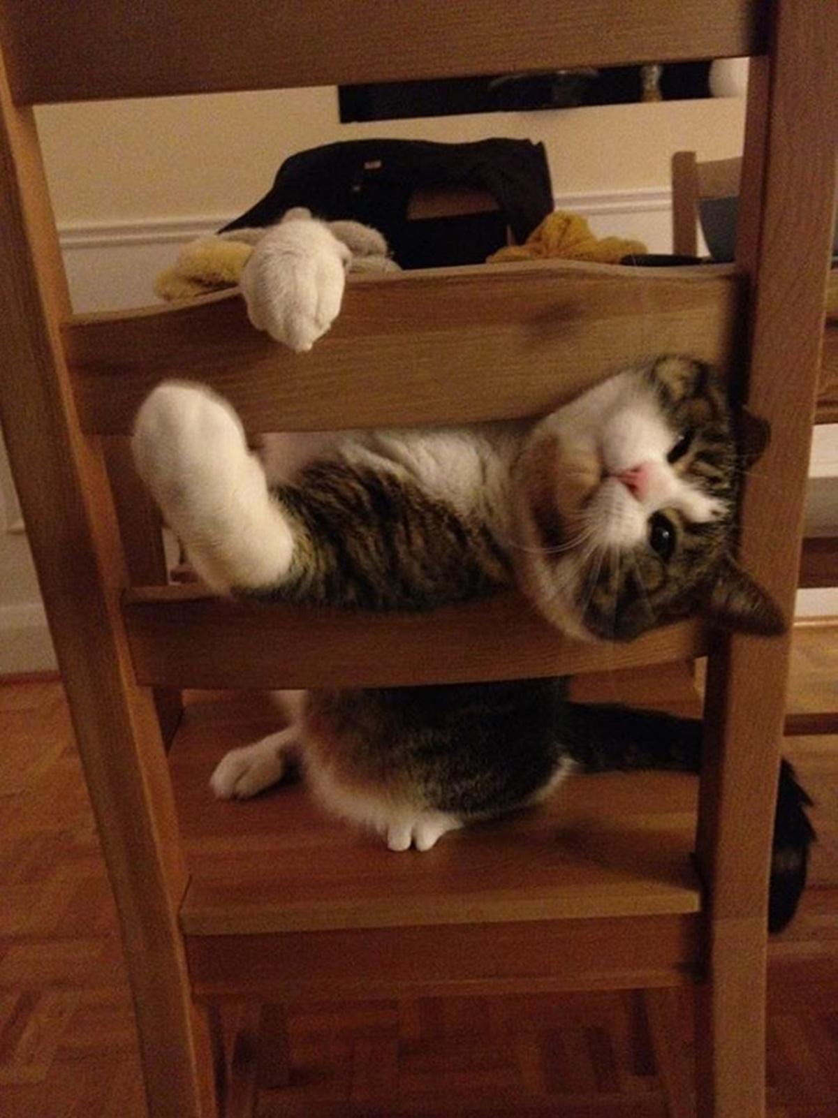 gatto scala