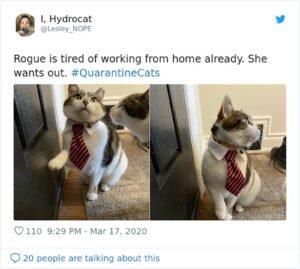 gatto smart working elegante