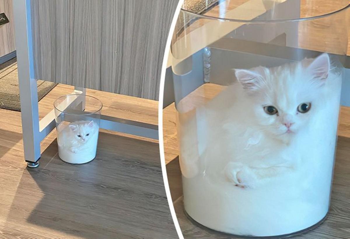gatto cestino