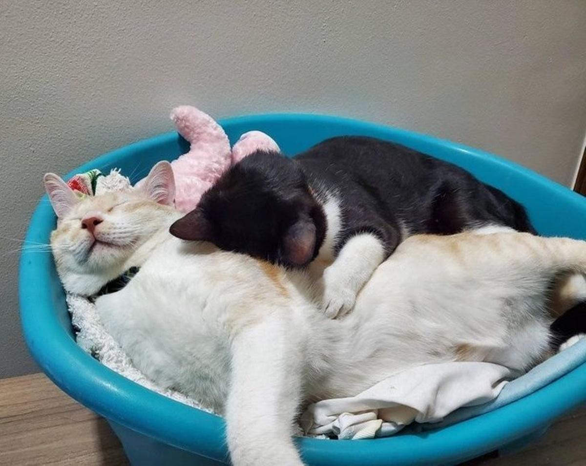 gatti bacinella