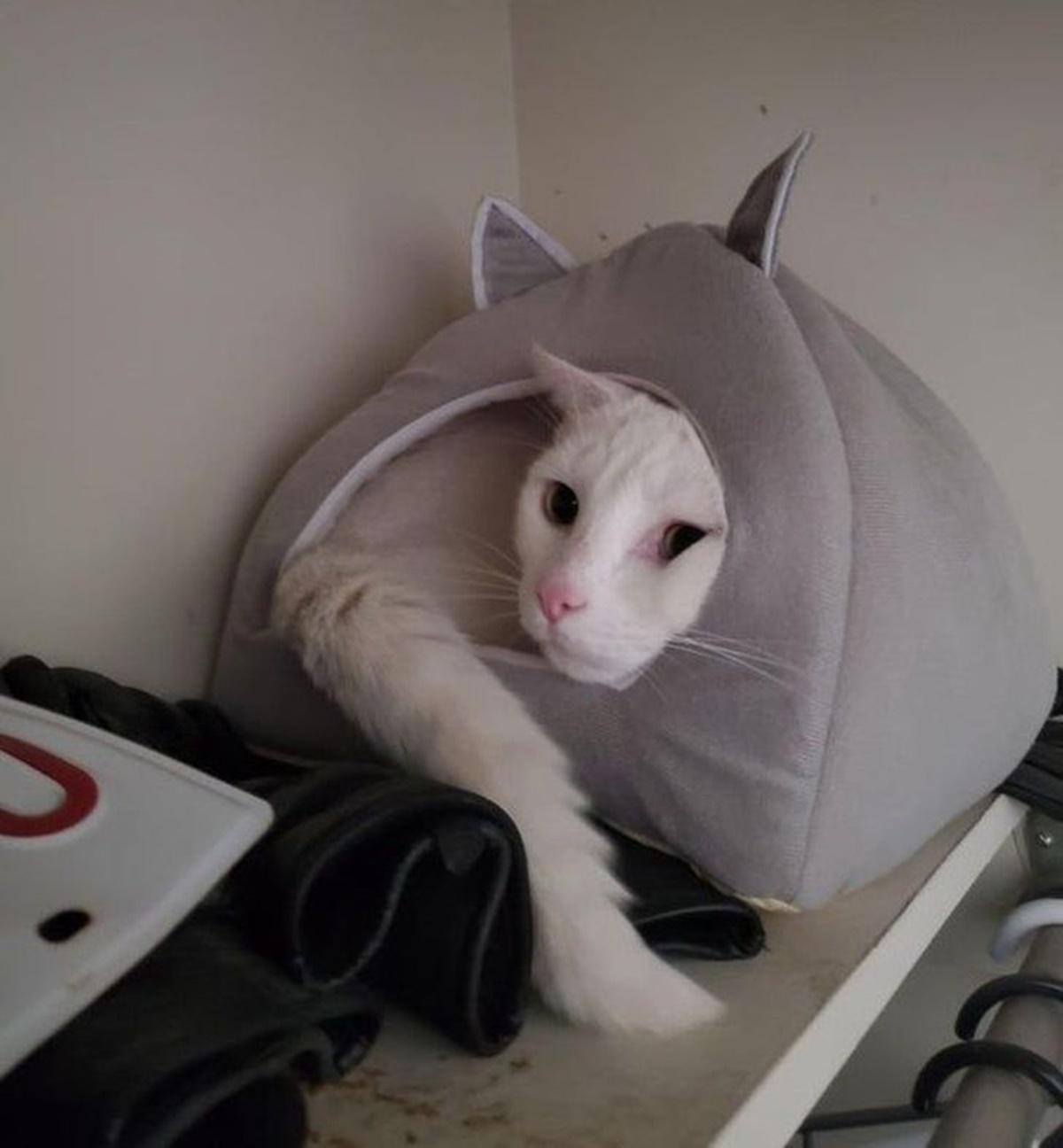 gatto cuccia