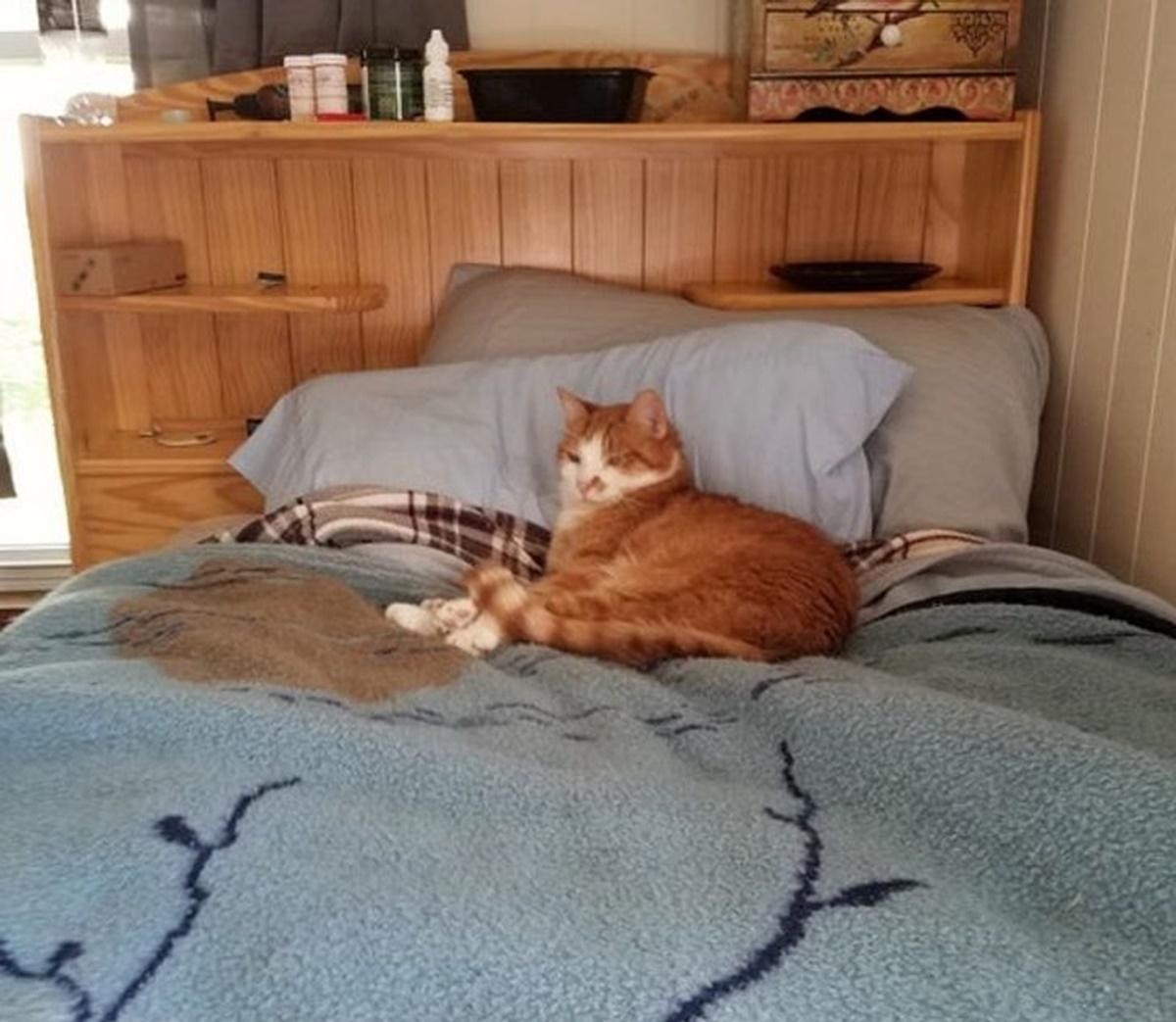 gatto letto
