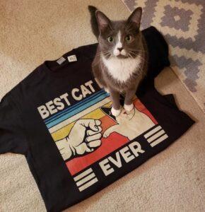 gatto maglia