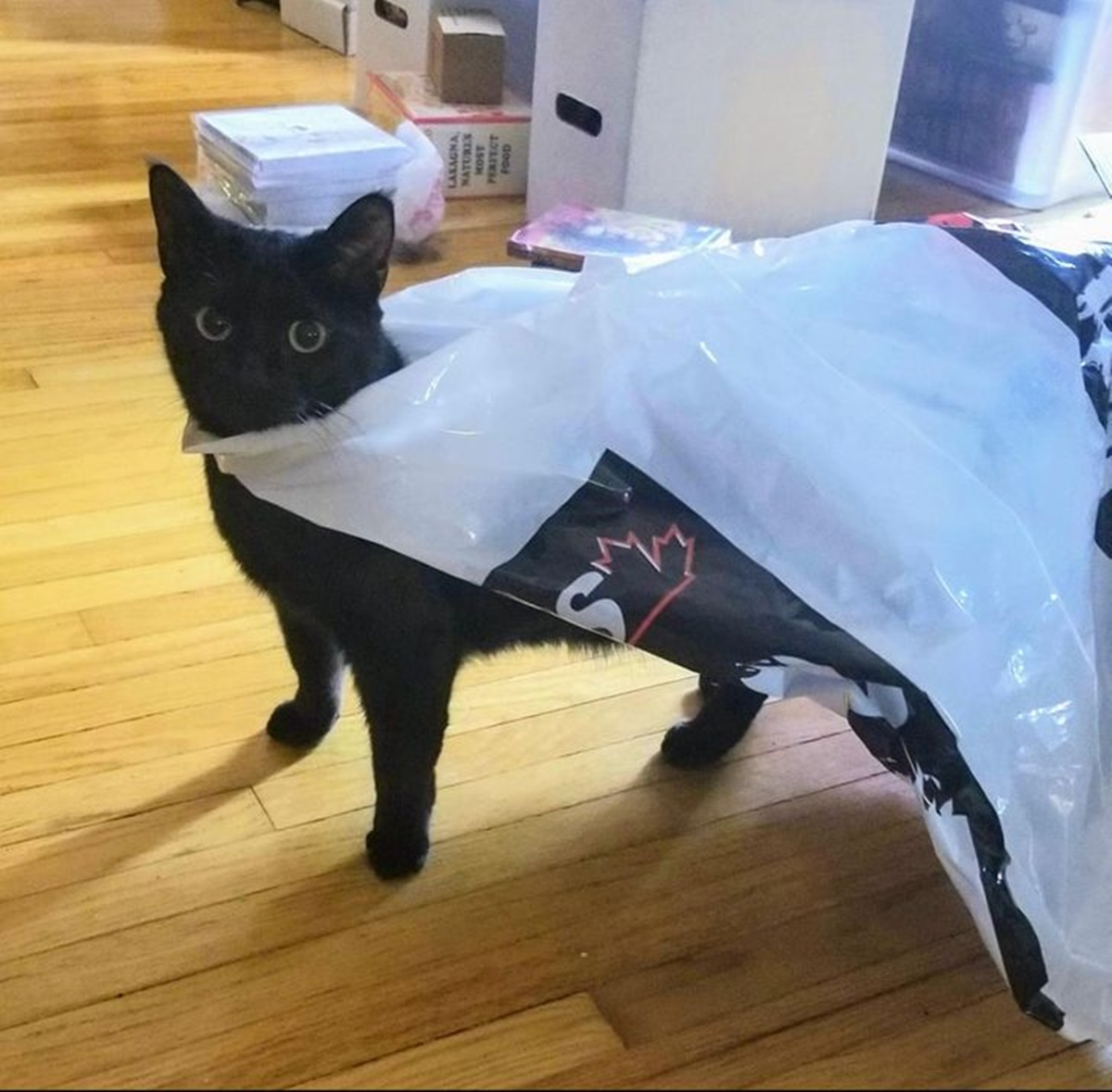gatto mantello