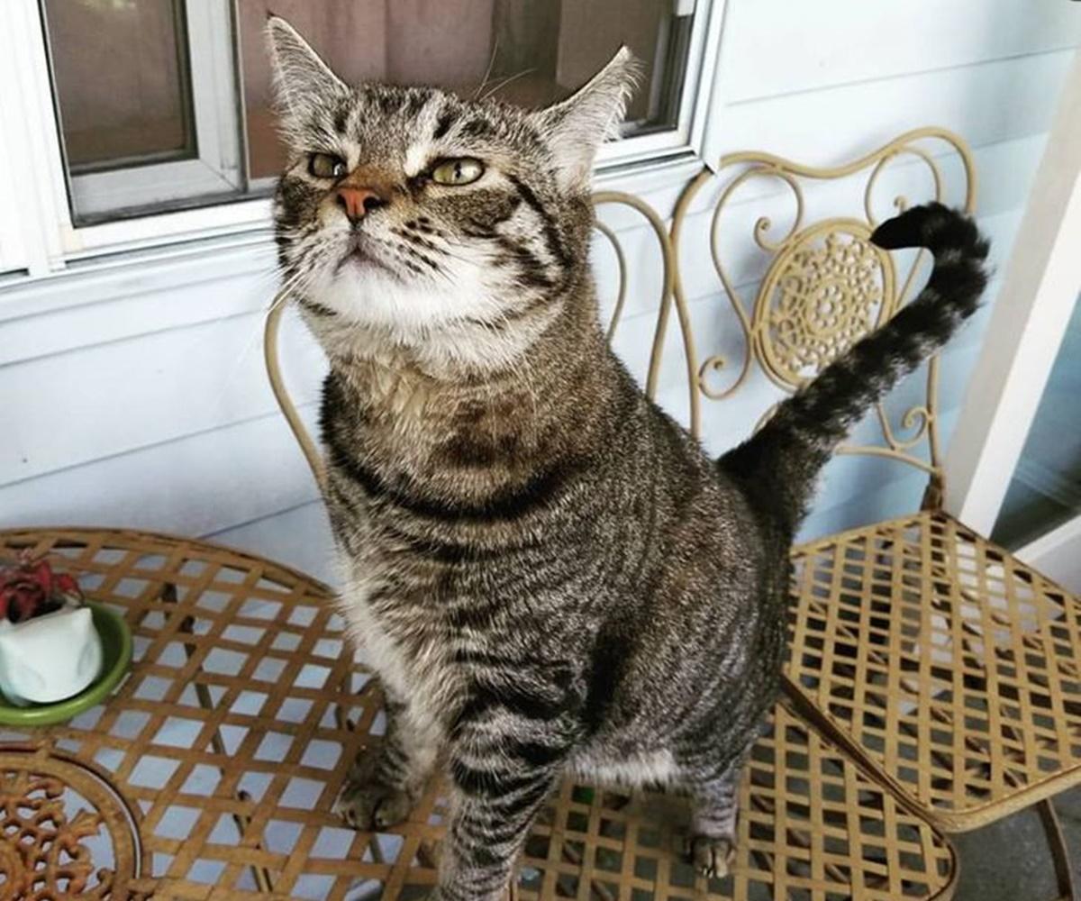 gatto fotogenico