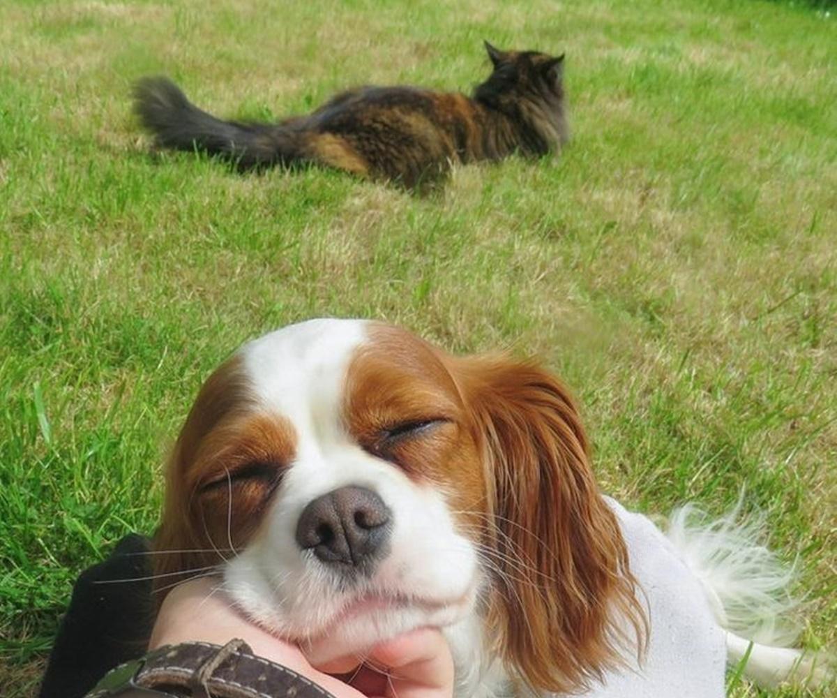 gatto geloso