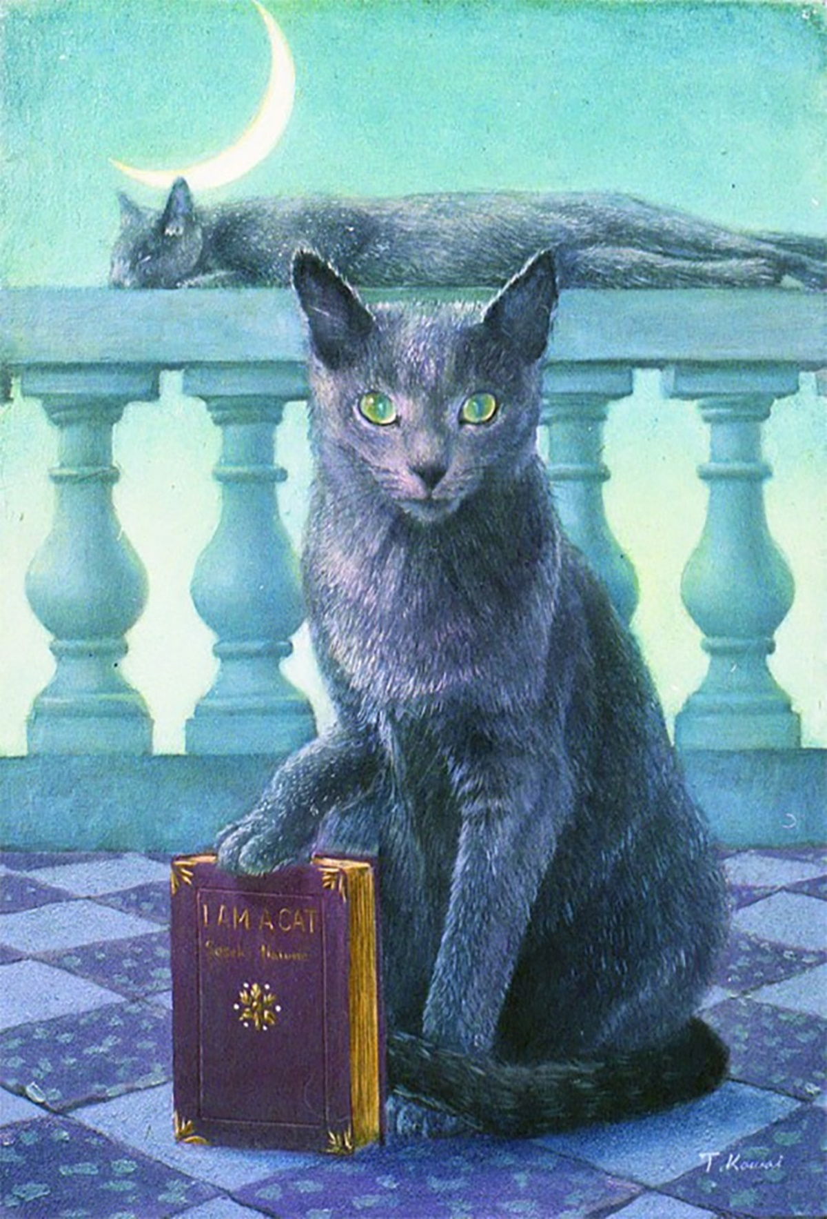 gatto legge