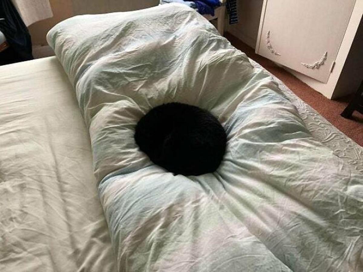 gatto nero letto