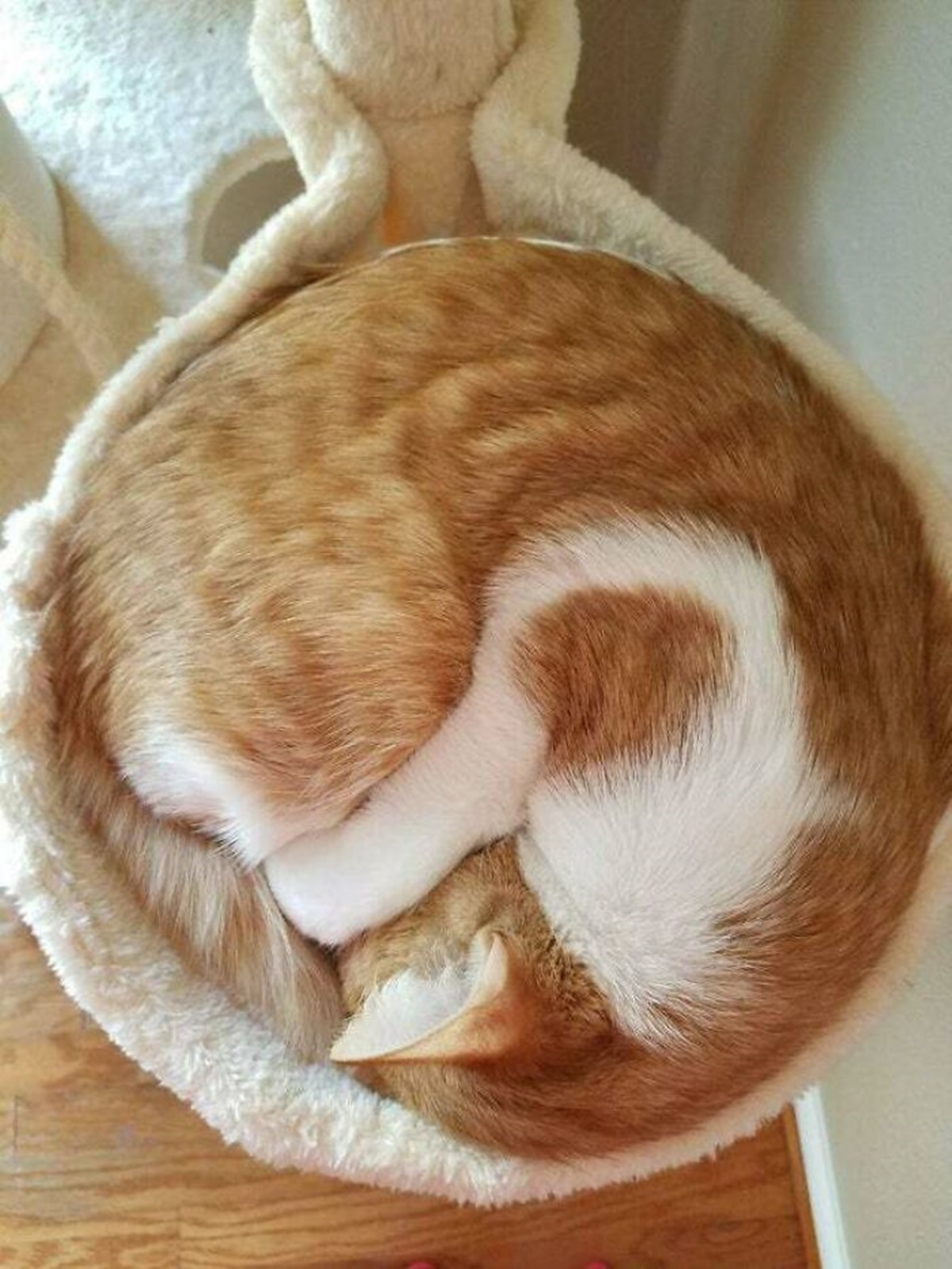 gatto spirale