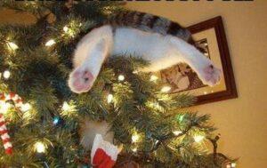 gatto nell'albero
