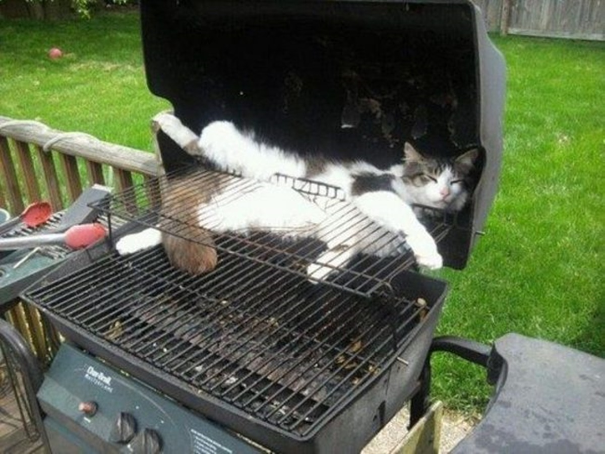 gatto barbecue