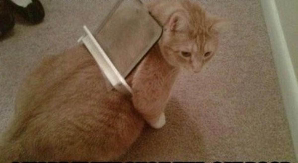 gatto porticina