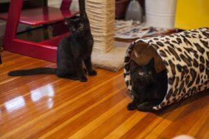 gatti coininquilini