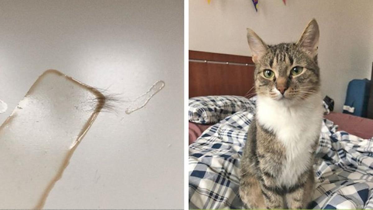 gatto peli