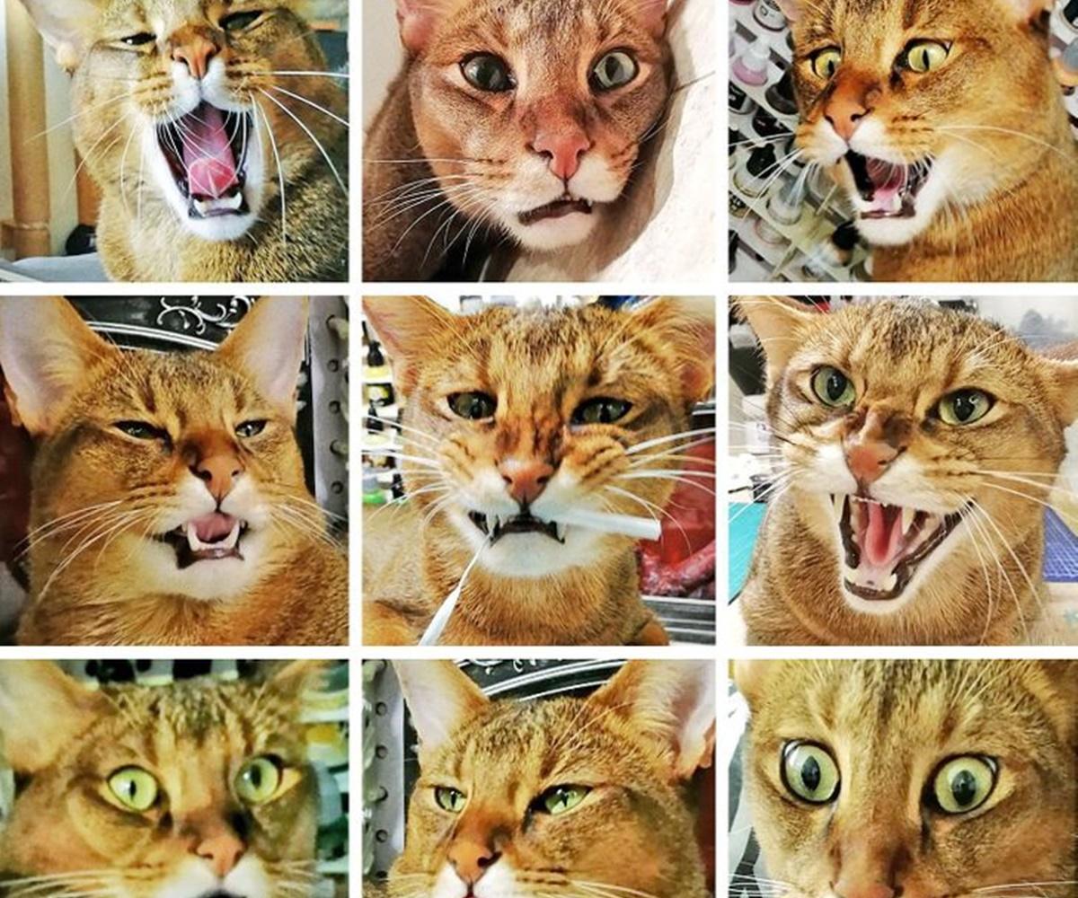 gatto nove
